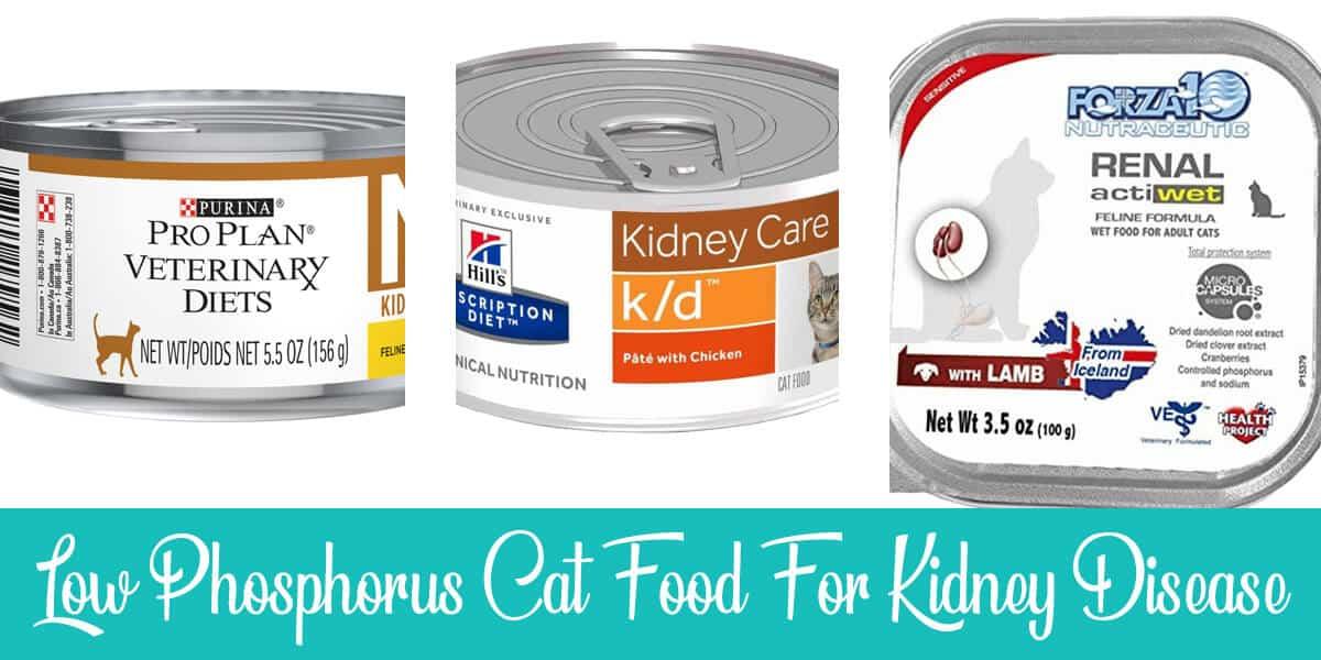 Top 4 Low Phosphorus Cat Food for Kidney Disease