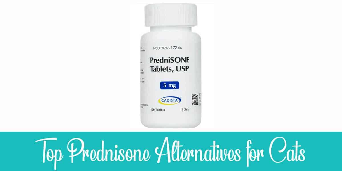 Alternatives to Prednisone for Cats