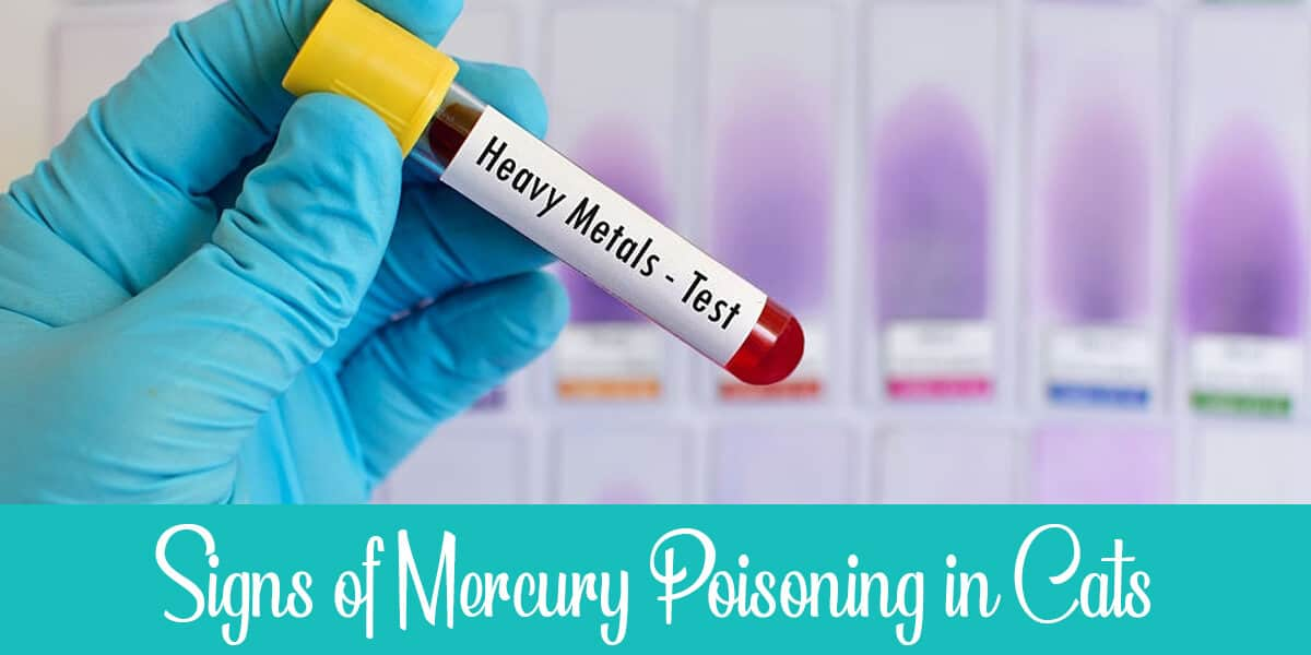 Symptoms of Mercury Poisoning in Cats